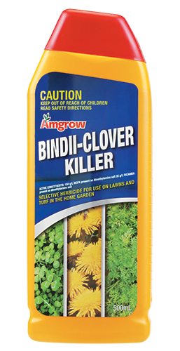 Bindii-Clover Product Image