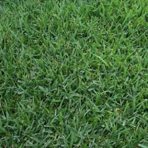 Empire Zoysia Product Image
