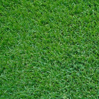 Palmetto Soft Leaf Buffalo Product Image