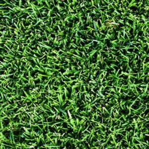 Nullarbor Couch Grass Product Image