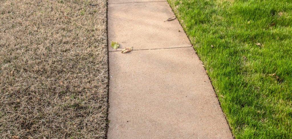 turf growing winter