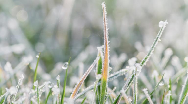 Winter Lawn Care