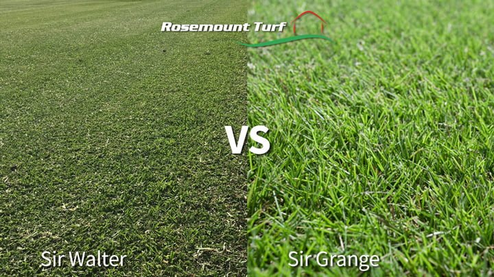 Sir Grange vs Sir Walter