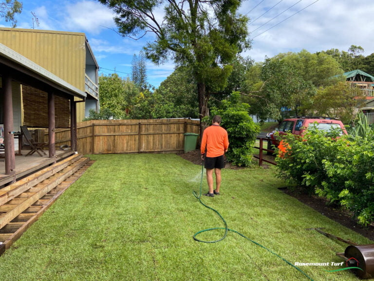 Empire Zoysia Mount Coolum After
