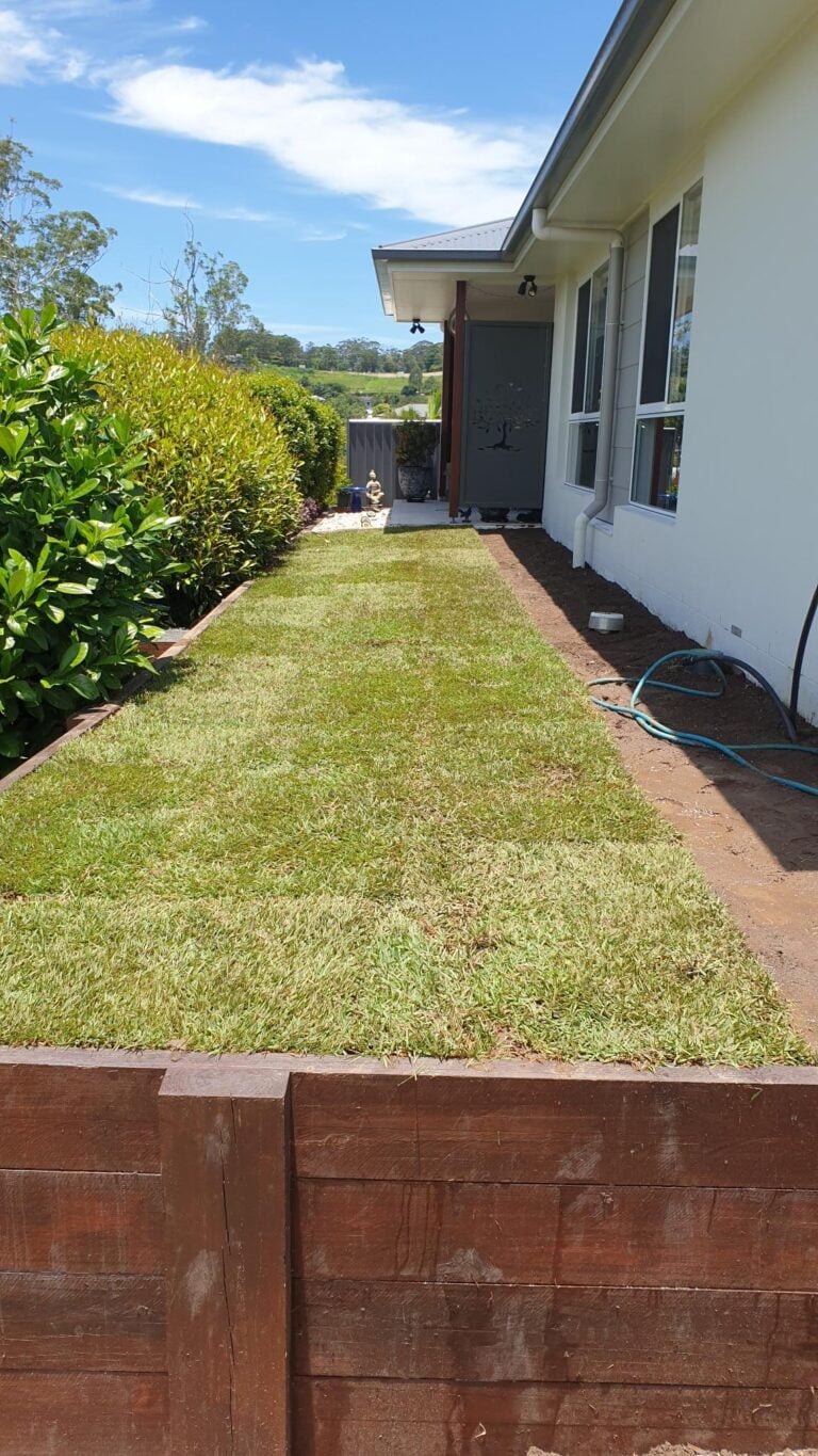 Rotary Hoe and Empire Zoysia Woombye After